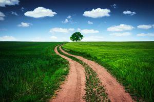 Бесплатные фото поле,холм,дорога,дерево,трава,небо,природа