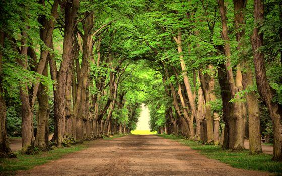 Photo free road, beautifully, trees