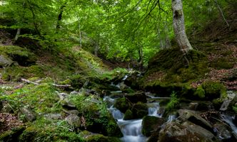 Photo free forest, trees, river