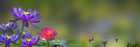 Фото бесплатно цветочная композиция, цветы, флора