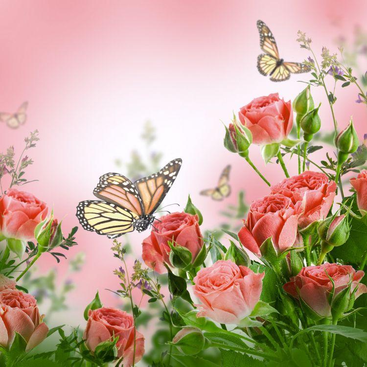 Фото бесплатно роза, бабочка, розы, цветы, букет, цветочная композиция, флора, бабочки, цветы