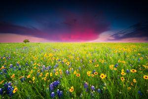 Бесплатные фото закат,поле,цветы,цветочное поле,цветение,пейзаж
