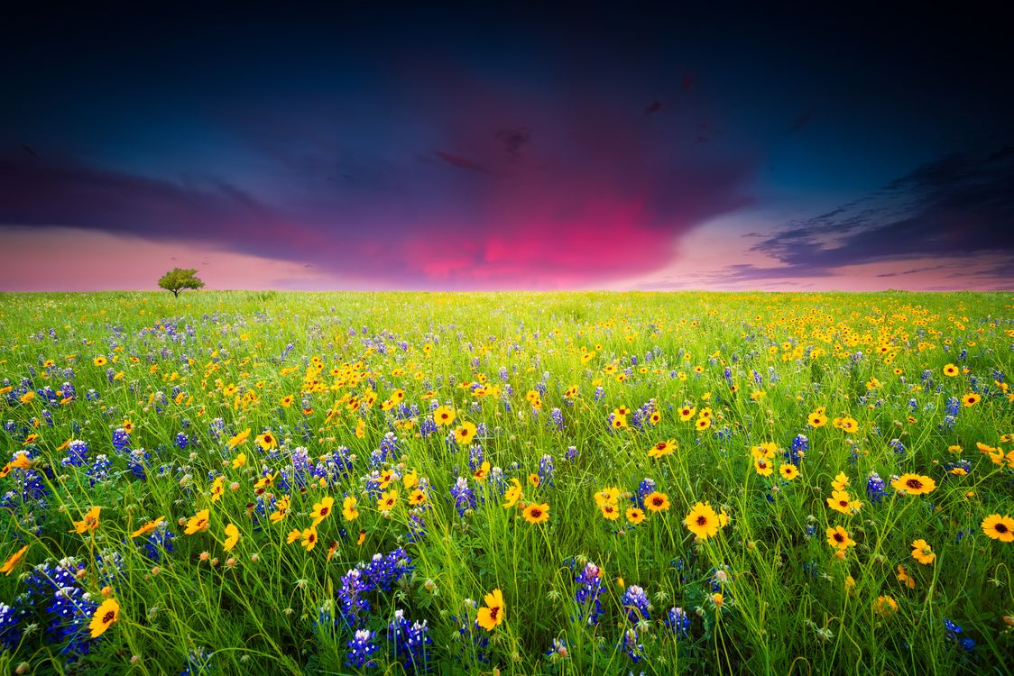 Photos for free sunset, flowers, landscape - to the desktop