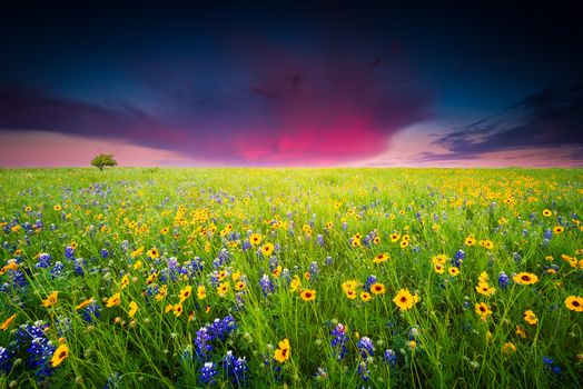 Фото бесплатно закат, цветы, пейзаж