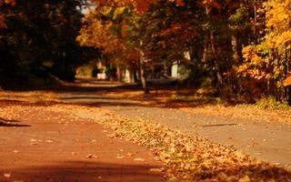 Фото бесплатно осень, размытость, город