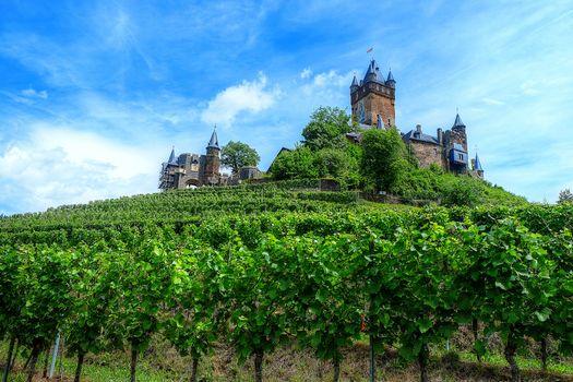 Фото бесплатно Виноградник, пейзаж, Германия