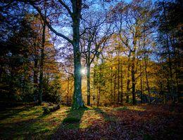 Фото бесплатно осень, лес, солнечные лучи