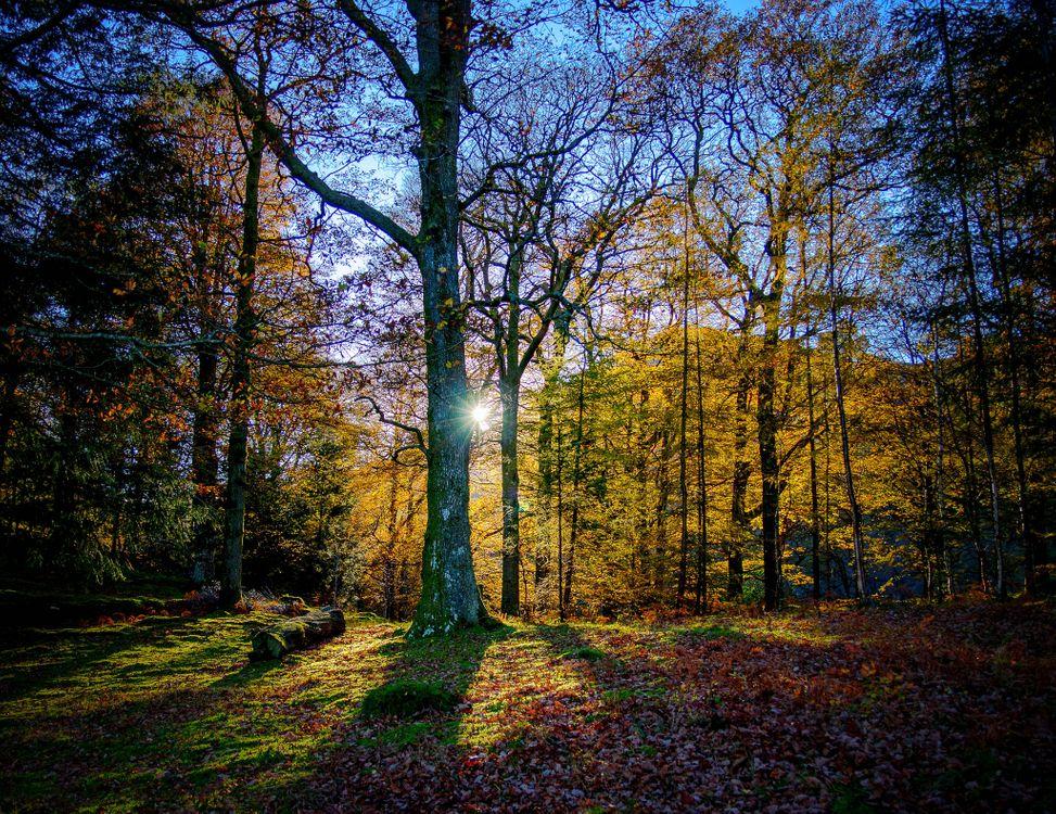 Фото бесплатно осень, лес, солнечные лучи - на рабочий стол
