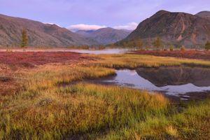 Заросшее озеро · бесплатное фото