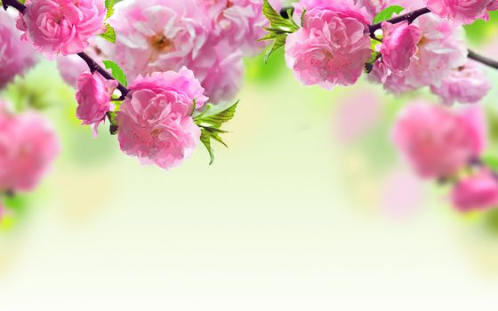 Photo free almond, blossoms, flowers