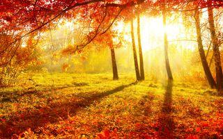 Photo free autumn, burgundy, forest