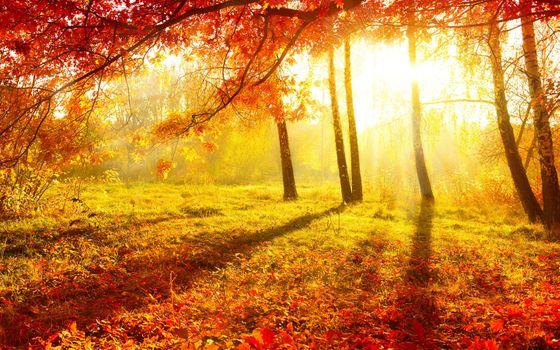 Заставки осень, бордовые, лес
