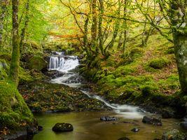 Бесплатные фото осень,водопад,речка,ручей,лес,деревья,осенние листья