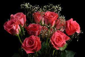 Фото бесплатно розы, букет, цветок