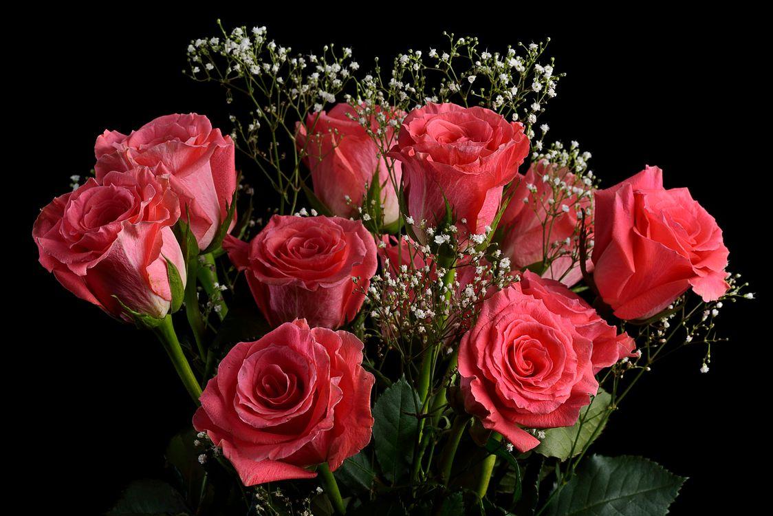 Фото бесплатно розы, букет, цветы, цветок, роза, флора, чёрный фон, цветы
