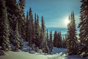 Фото бесплатно Гора Ренье Национальный парк, природа, пейзаж