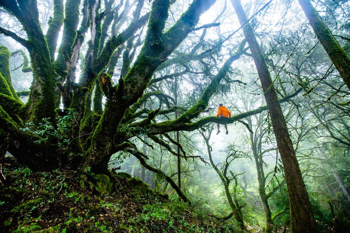 Фото бесплатно человек, дерево, природа - на рабочий стол