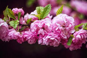 Заставки цветущая ветка,цветы,весна,цветение,цветочная композиция,флора