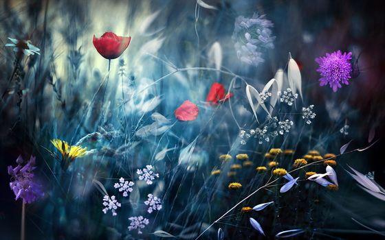 Заставки цветы, манипуляции, природа