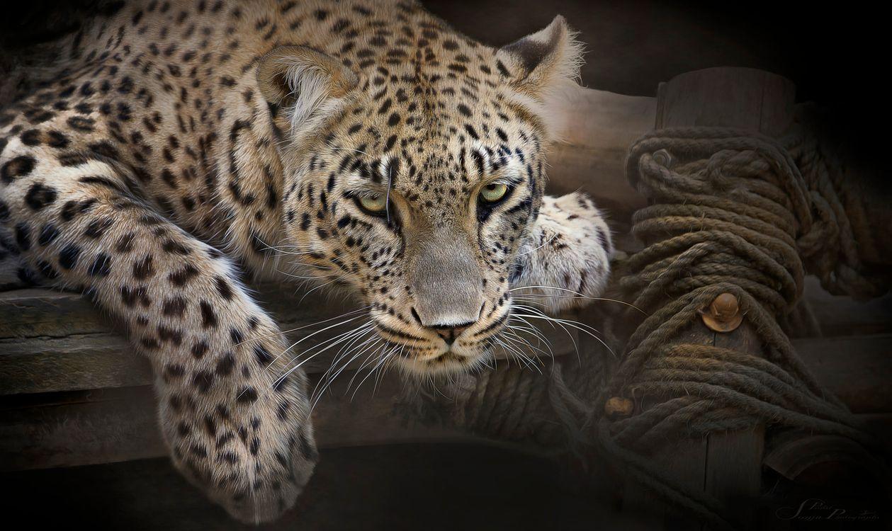 Фото бесплатно хищник, морда, животное - на рабочий стол
