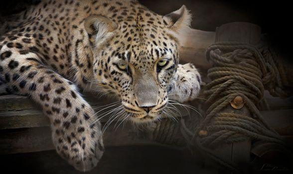 Photo free predator, snout, animal