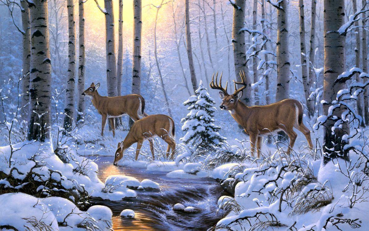Обои олени на водопое, зима, олени, речка, лес, деревья, природа картинки на телефон