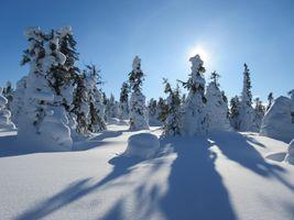 Фото бесплатно зима, снег, ели, деревья, сугробы, пейзаж