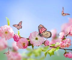 Бесплатные фото бабочка,цветы,ветка,сакура,цветение,art