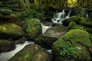 Photo free plants, moss, stones