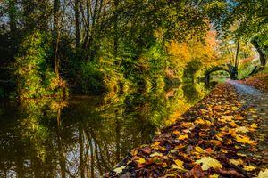 Бесплатные фото осень,парк,дорога,лес,деревья,мост,канал