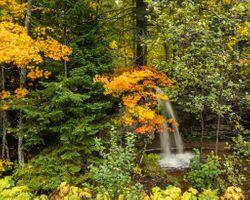 Бесплатные фото осень,водопад,лес,деревья,природа,пейзаж