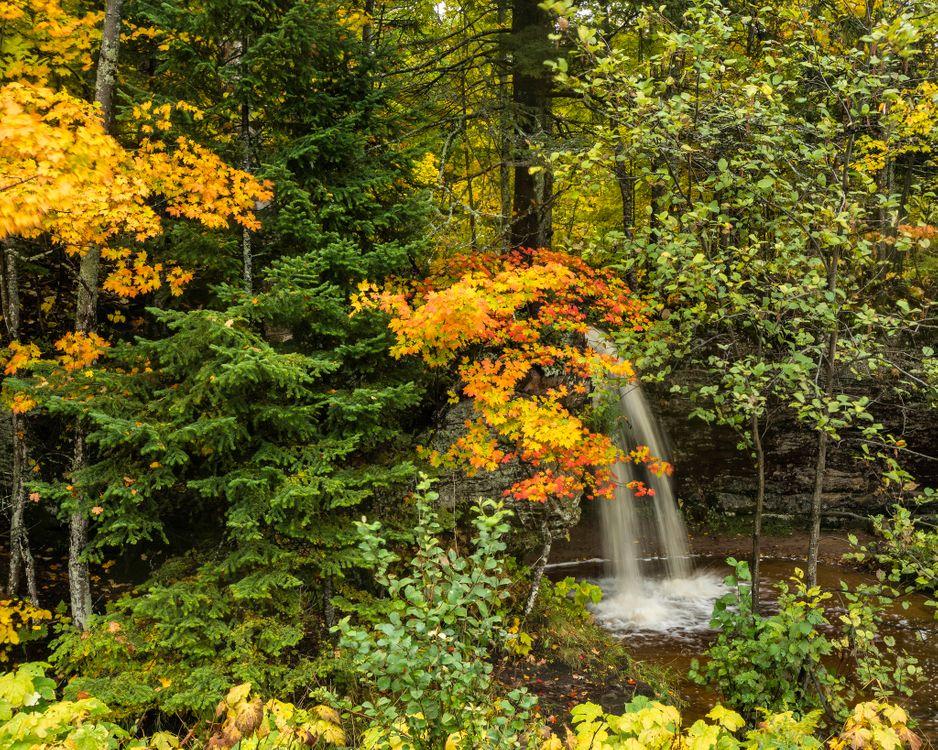 Маленький водопад в осеннем лесу · бесплатное фото
