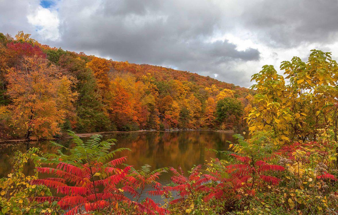 Фото бесплатно озеро, осень, осенние листья - на рабочий стол