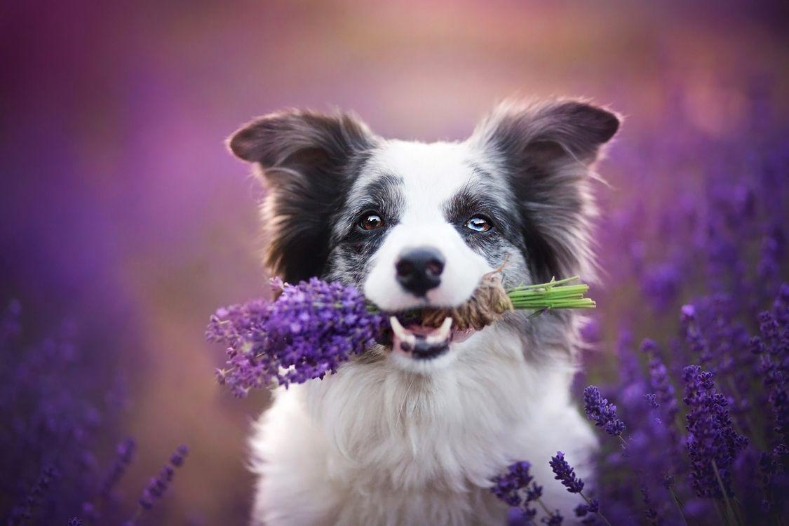 Собака с букетиком · бесплатная заставка