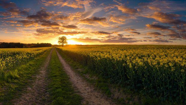 Заставки закат,поле,дорога,дерево,цветы,небо,природа,пейзаж