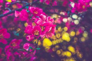 Японский сад сакура