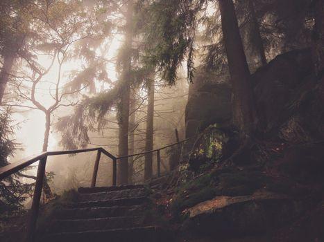 Фото бесплатно природная среда, размышление, Парк