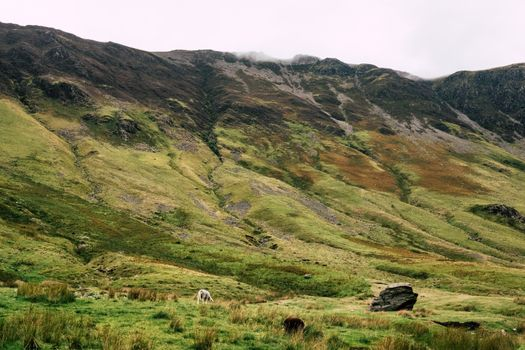 Photo free field, pasture, hill