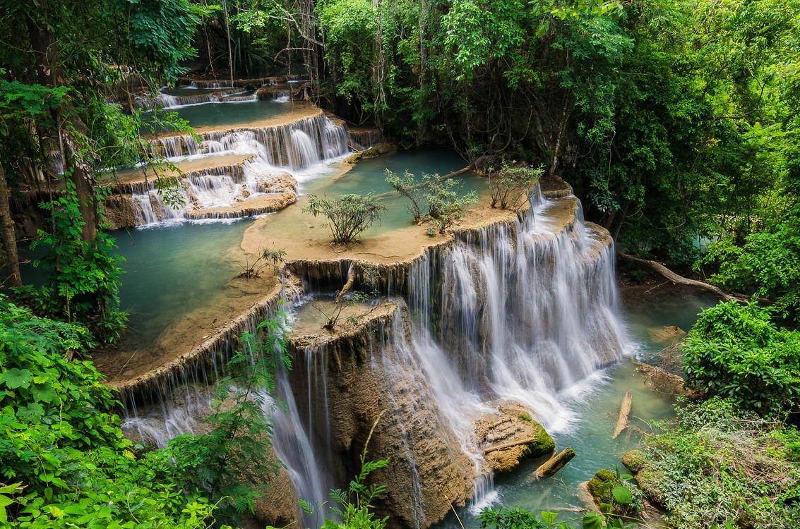 Живая природа · бесплатное фото