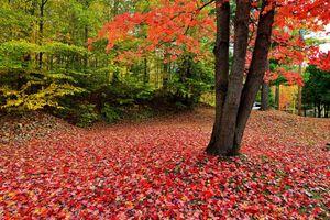 Фото бесплатно осень, осенние цветы, осенние листья