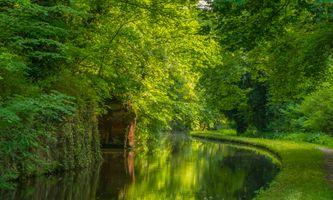 Фото бесплатно Стаффордширский и вустерширский канал в Кинвере, Англия, лес