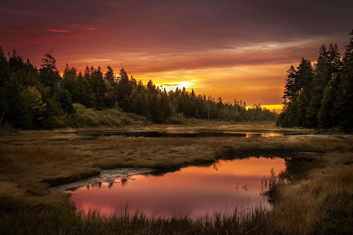 Фото бесплатно лес, озеро, пейзаж, отражение, закат, заводь, вечер, лето, деревья, болото, пейзажи - скачать на рабочий стол