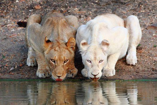 Фото бесплатно вода, усы, хищник