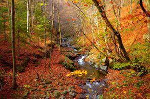 Фото бесплатно камни, природа, волшебная река