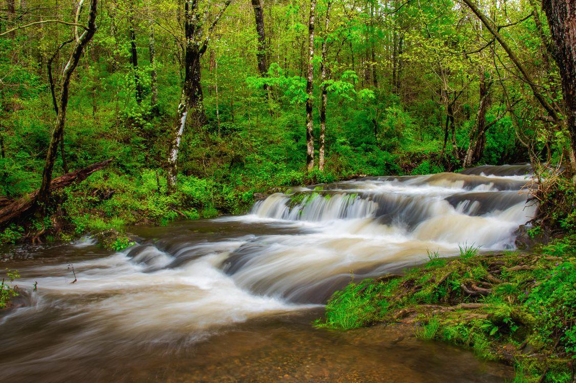 Фото бесплатно North Carolina, Great Smoky Mountains National Park, река, камни, лес, деревья, природа, пейзаж, пейзажи - скачать на рабочий стол