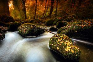 Заставки осенние листья, камни, осень