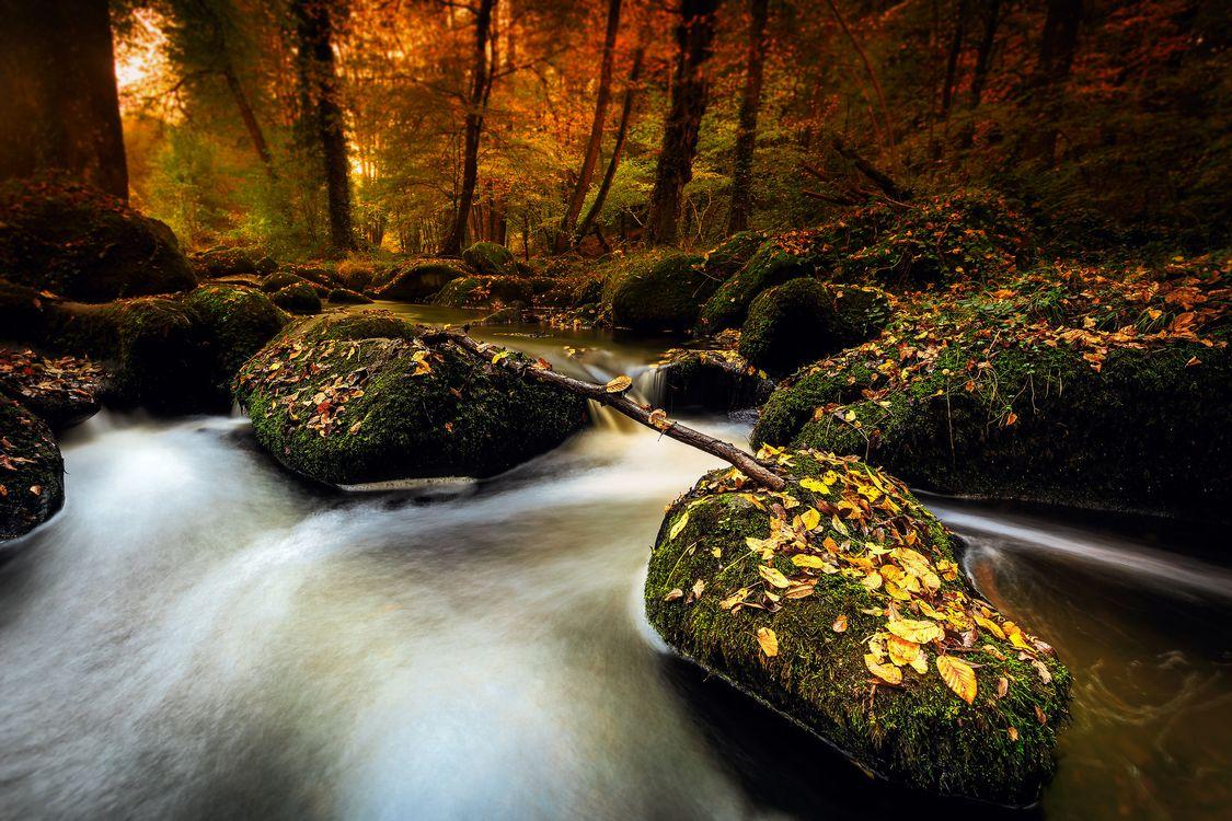 Фото бесплатно осенние листья, камни, осень - на рабочий стол