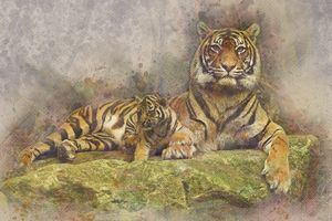 Фото бесплатно тигр, кошка, кошачий
