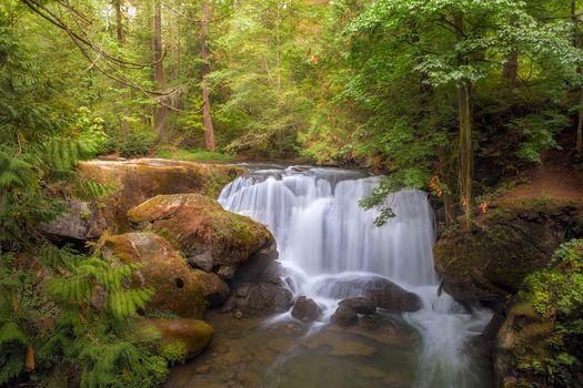 Фото бесплатно Водопад, парк Whatcom Falls, Беллингхэме, штат Вашингтон, лес, деревья, природа, пейзаж