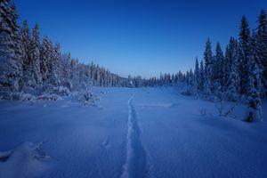 Бесплатные фото зима,снег,сугробы,тропинка,закат,сумерки,лес